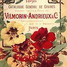 Vintage Seed Catalog Poster Pansies by mindydidit