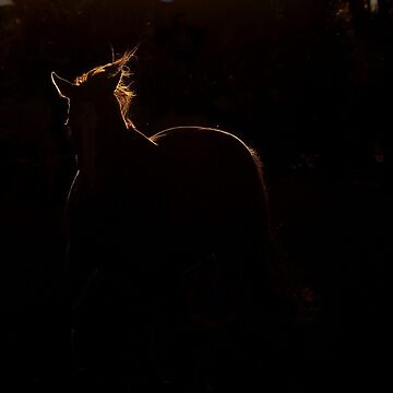 Prancing with light.. by kurrawinya