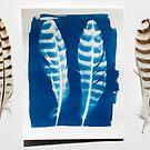Birds of a feather Blueprint by VanOostrum