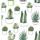 Watercolour cacti & succulents by Vicky Webb