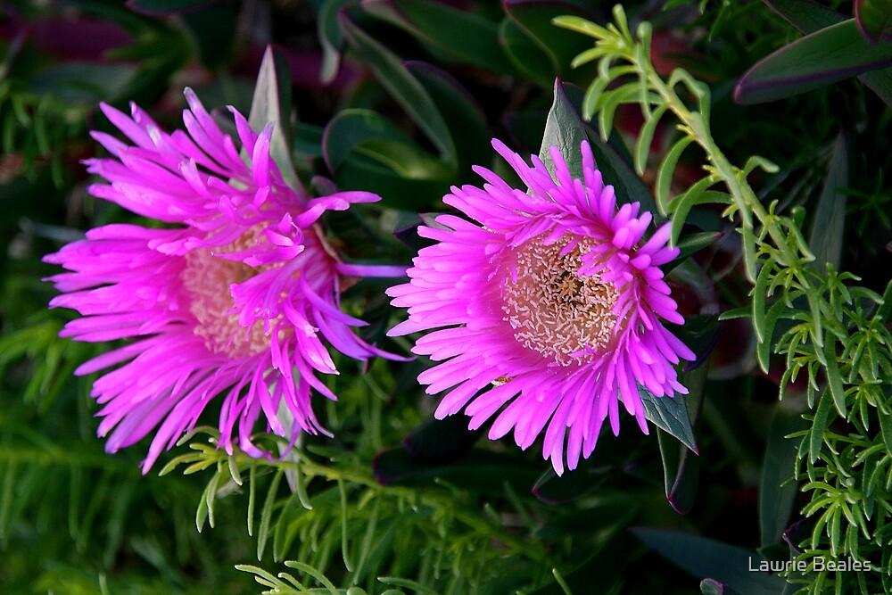Purple Flower by Lawrie Beales