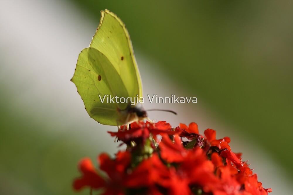 Closer by Viktoryia Vinnikava