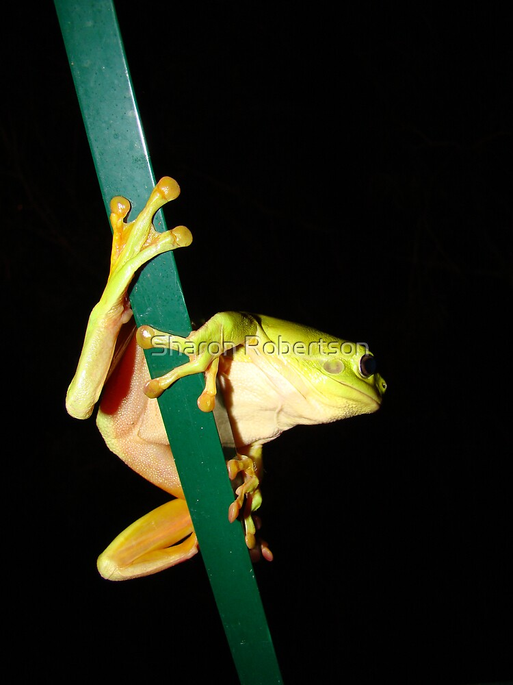 Green Tree Frog Hanging On by Sharon Robertson