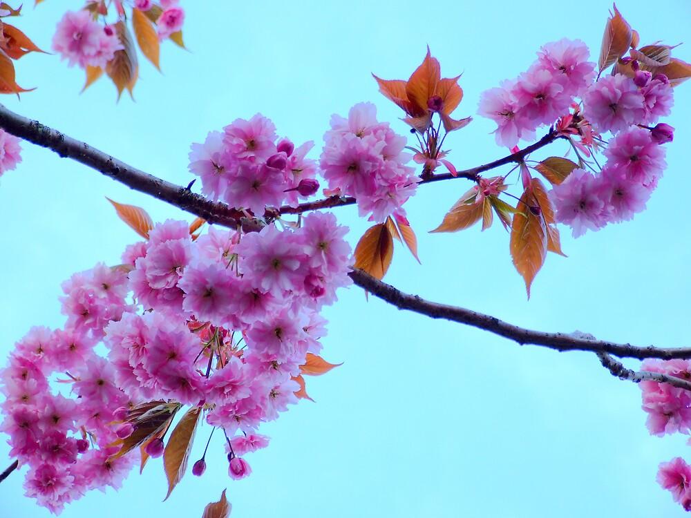 Bright blooms by Maureen Brittain