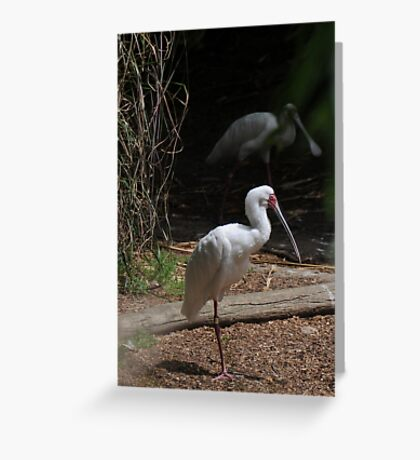 Ghostly Greeting Card