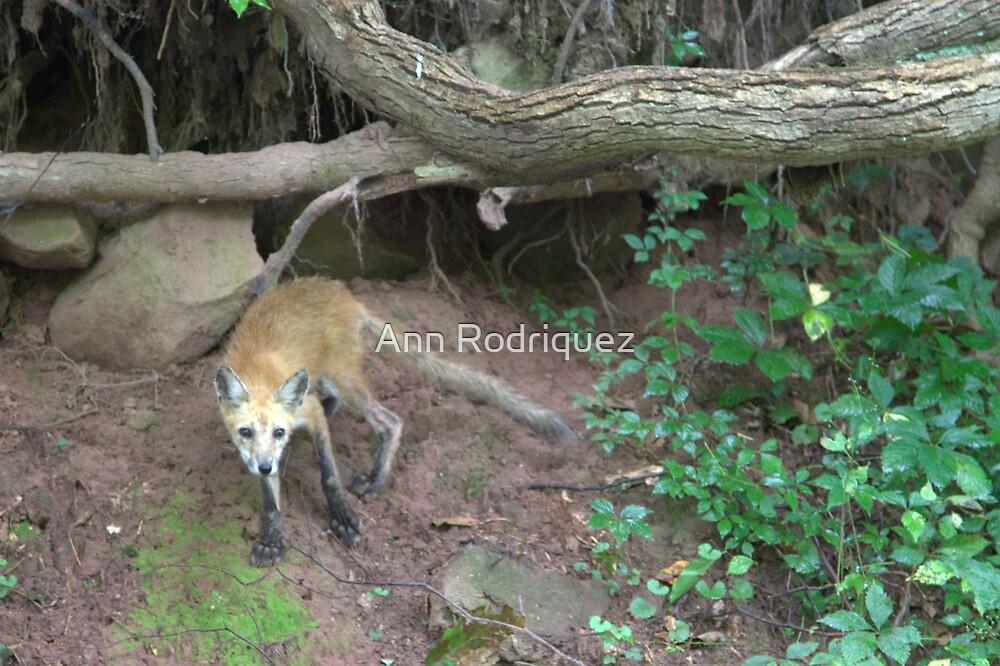 Foxy by Ann Rodriquez