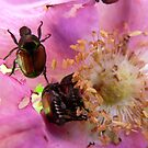 bugs in flower by nicksarr1