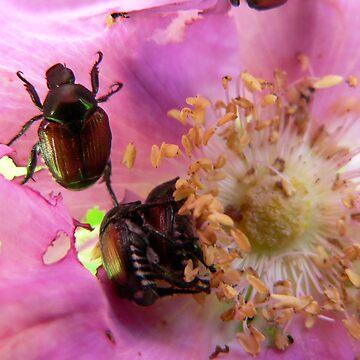 bugs in flower by nicksarr1