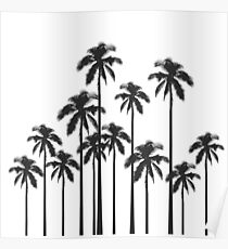 Black and White Exotic Tropical Palm Trees Poster