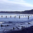 Groynes at Sandsend by Trevor Kersley
