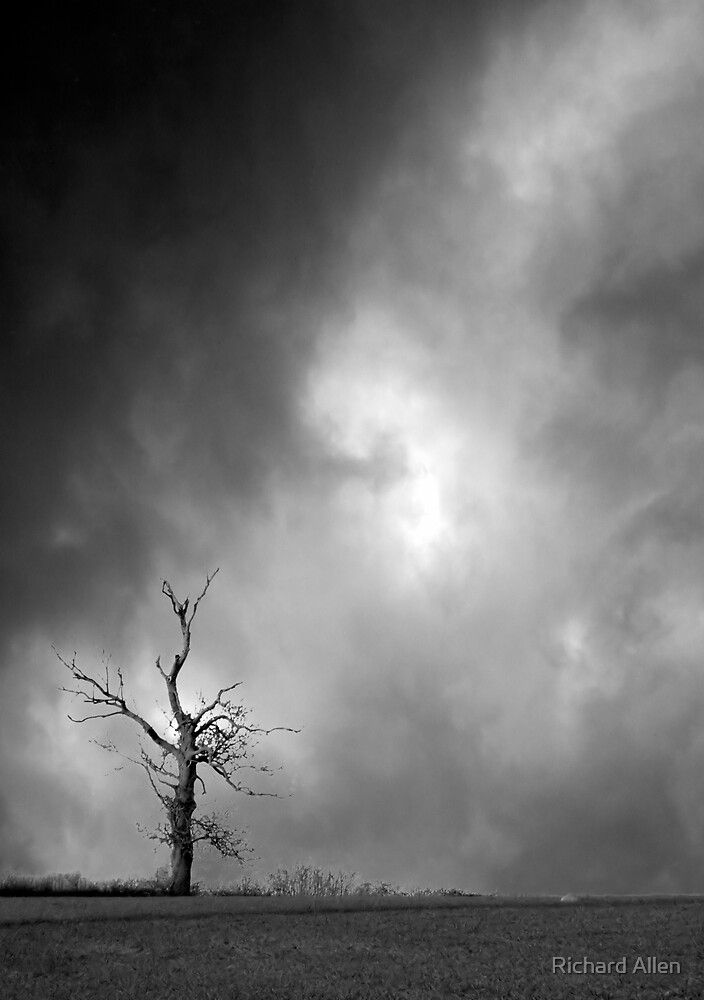 Lone Tree by Lea Valley Photographic
