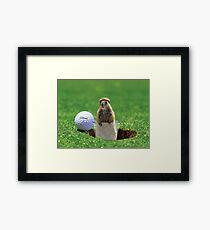 Gopher Golf Framed Print