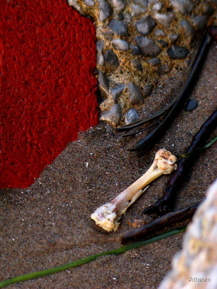 Bone In The Sand by Atheum