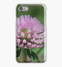 Red clover, (Trifolium pratense) iPhone Case/Skin