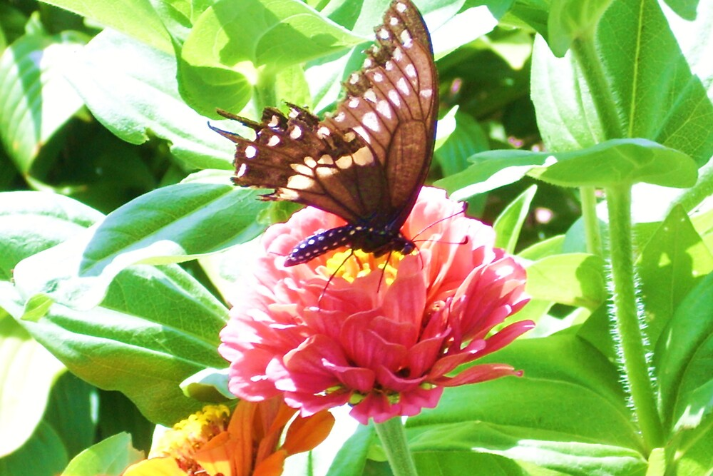 Flower with Butterfly by Abigail .