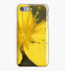 St John's Wort (Hypericum perforatum) iPhone Case/Skin
