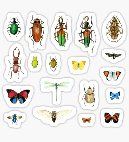 The Usual Suspects - insects on white - watercolour bugs pattern by Cecca Designs Sticker