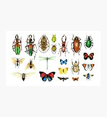 The Usual Suspects - insects on white - watercolour bugs pattern by Cecca Designs Photographic Print