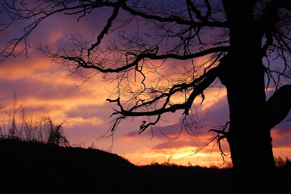 ebony oak sunrise. by welshlady