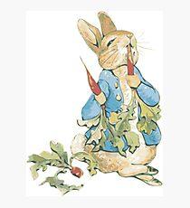 Peter Bunny Photographic Print
