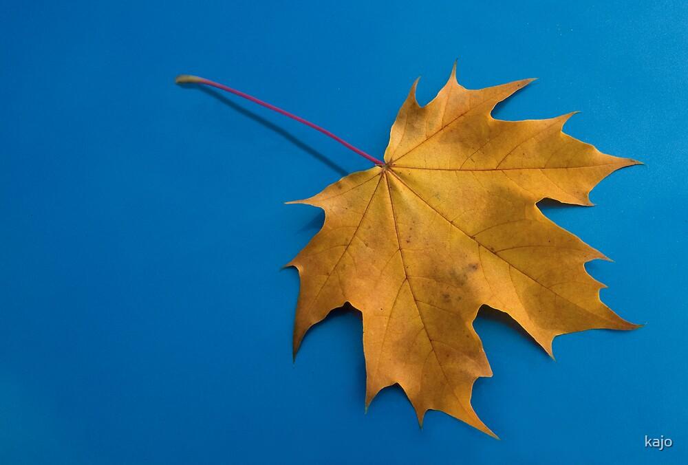 Autumn Leaf by kajo