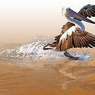 Coming in to land by Greta van der Rol