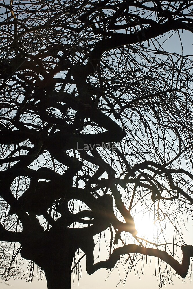 Tree Silhouette by LavaMel
