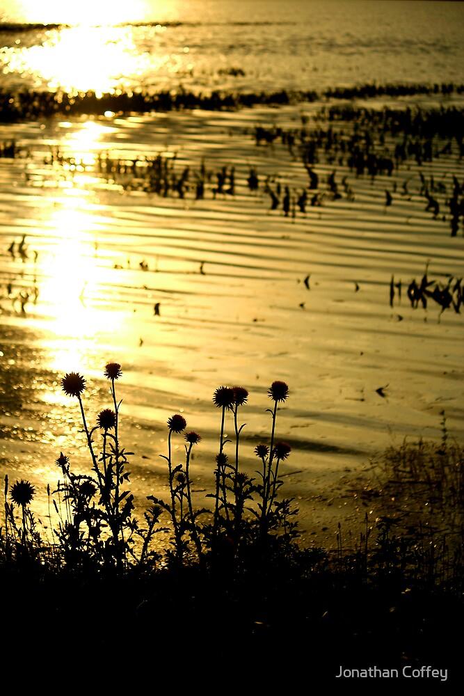 Golden Flood Water by Jonathan Coffey