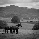 Black Horses On A Landscape - Black And White by ARTOFAMY