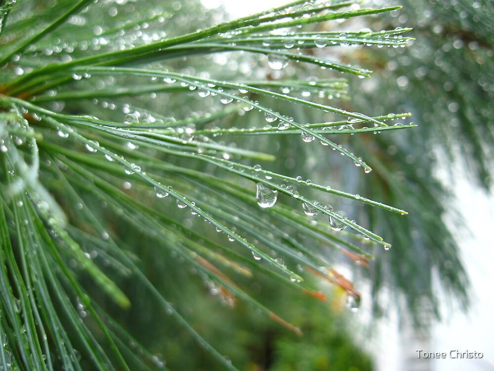 Raining Pines by Tonee Christo