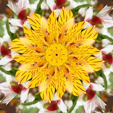 K137 Yellow Flower Kaleidoscope by Gravityx9