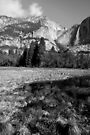 Yosemite Days by Varinia   - Globalphotos