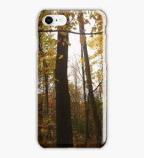 Fall woods iPhone Case/Skin