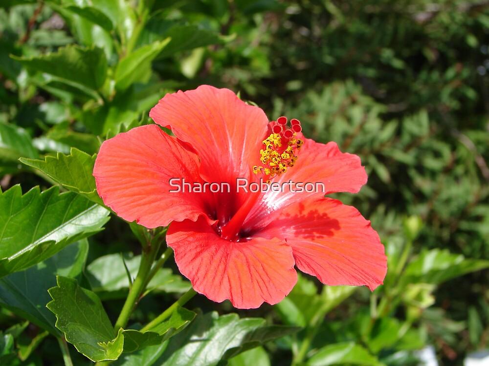 Flower by Sharon Robertson