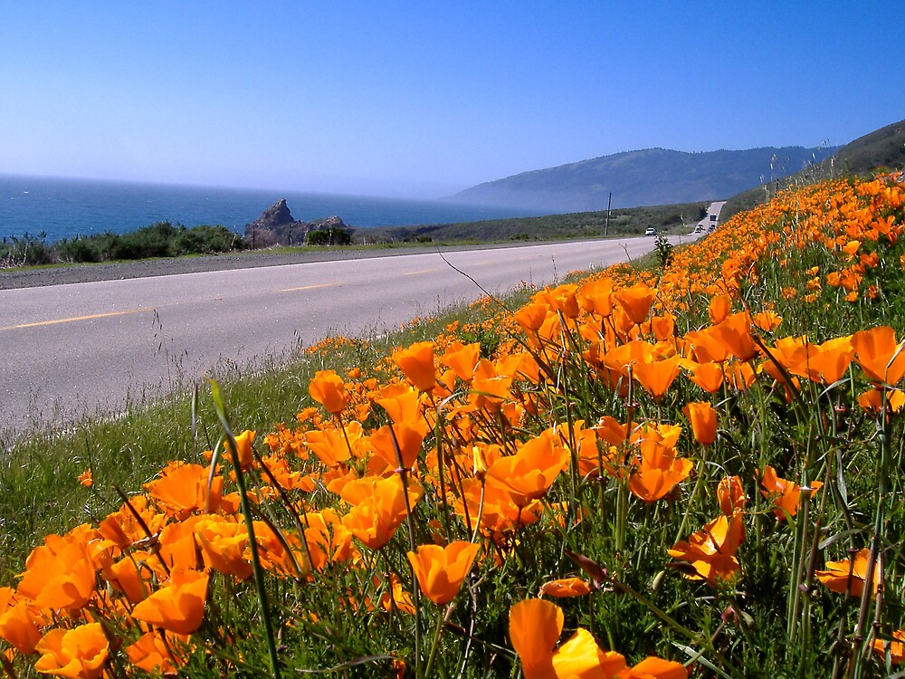 Poppies on highway by amira