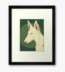 Ibizan Hound Framed Print