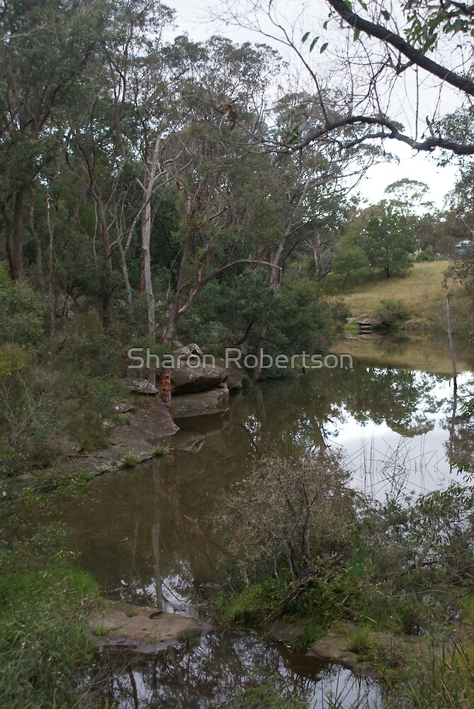 Creek Reflections by Sharon Robertson