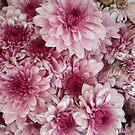 Dead Pink by RichCaspian