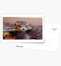 Snake Tongue Postcards