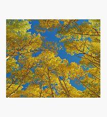 Aspen Trees Against Sky  Photographic Print