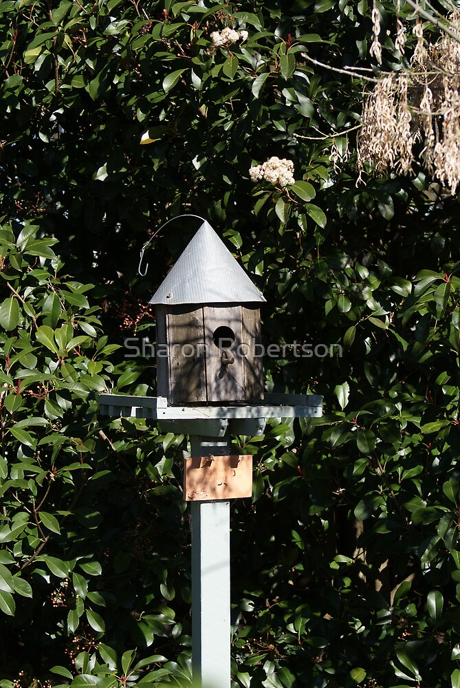 Bird House by Sharon Robertson