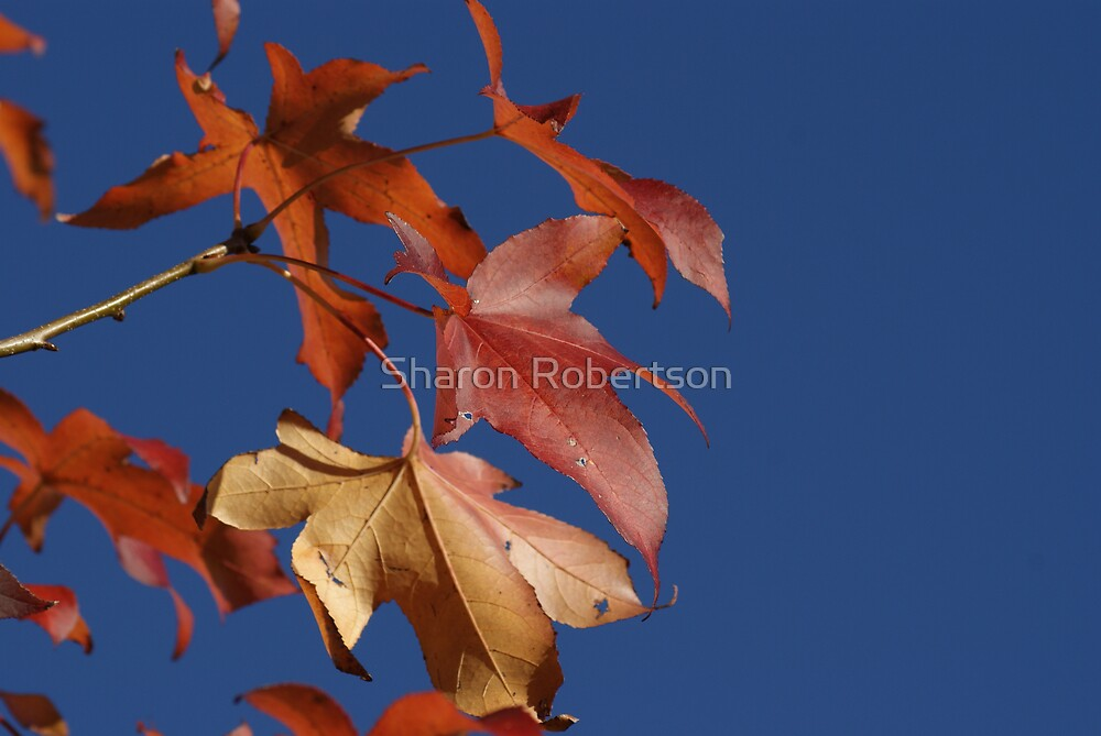 Autumn Leaves by Sharon Robertson