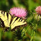 Beauty and the Thistle  by lorilee