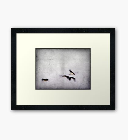 Flight of the Ibis Framed Print