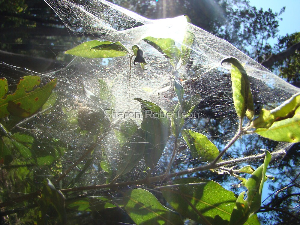 Spider Web Sheet by Sharon Robertson