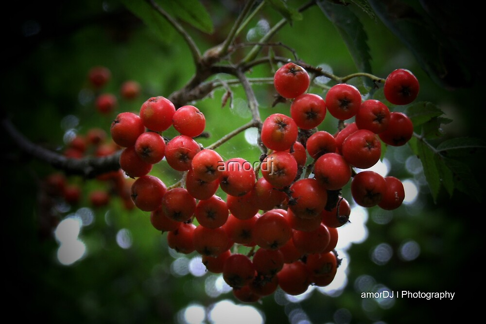 Wild berries by amordj