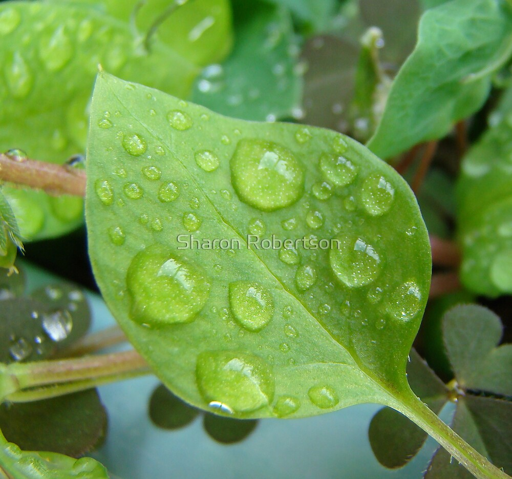 Water Drop Leaf by Sharon Robertson