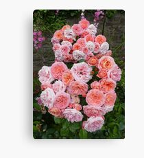 One Rose Cluster Canvas Print