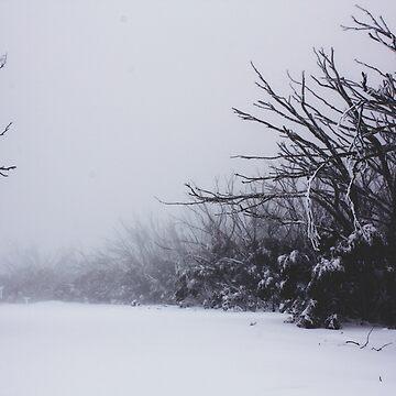 Winter wonderland by Mollie-Taylor