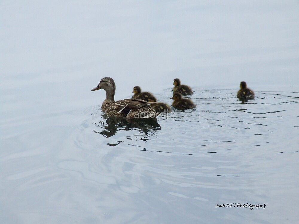 Duck family by amordj